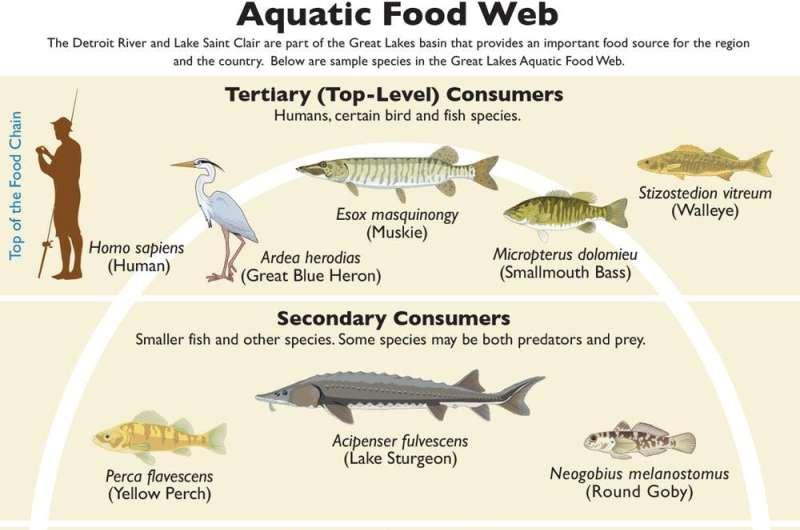 How marine algae could help feed the world