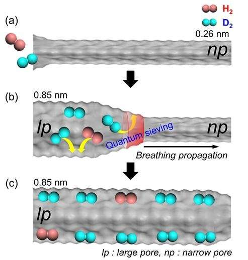 New strategy for isotope separation with flexible porous material