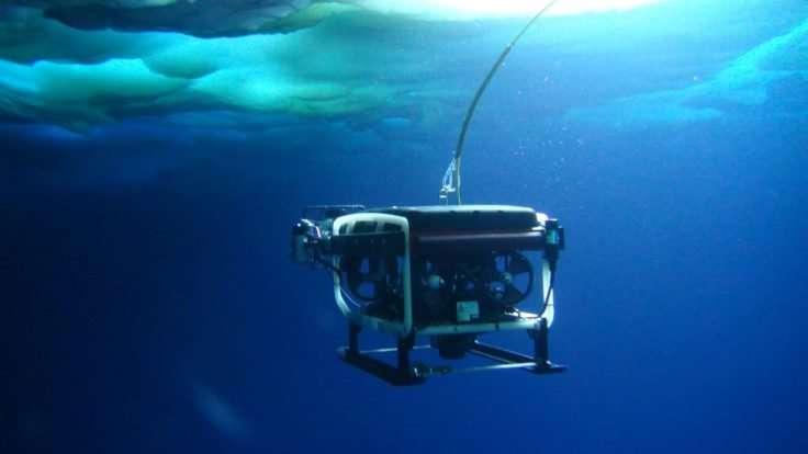 Study sheds new light on krill larvae survival