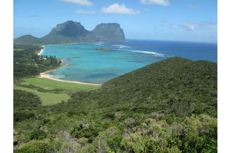A new species of hard coral from the World Heritage-listed Lord Howe Island, Australia