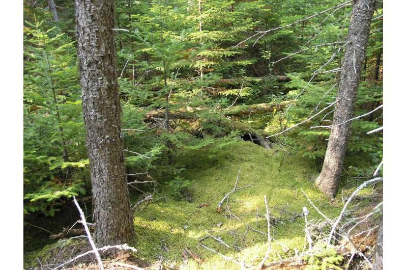 DNA barcoding technology helping monitor health of all-important boreal forest