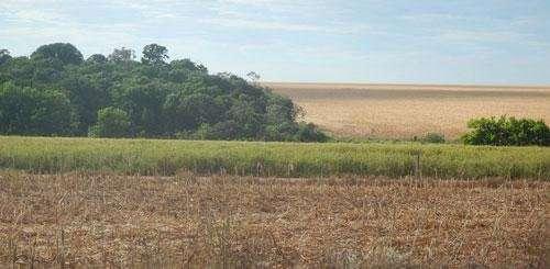 New analysis shows Brazil slows deforestation with land registration program