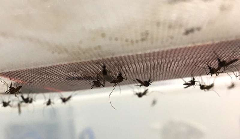 Scientists take the temperature of dengue fever risk
