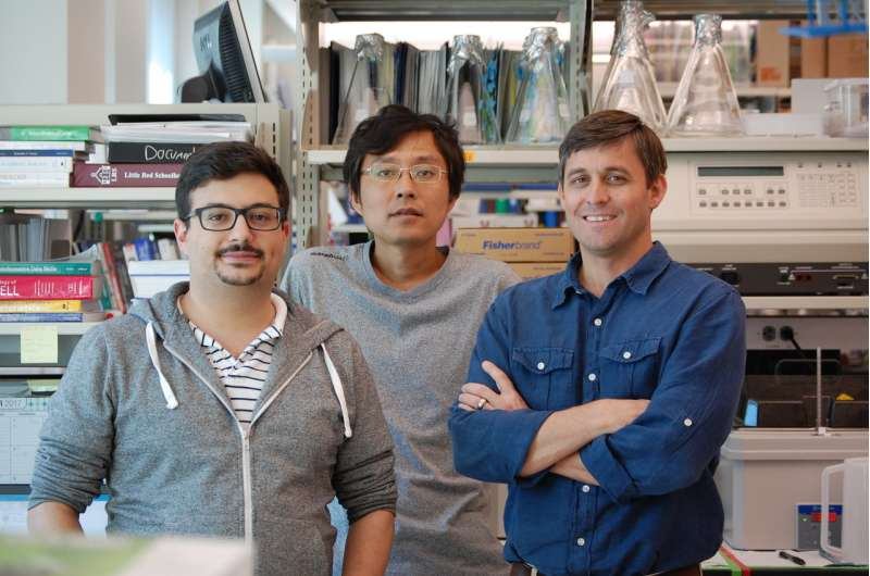 Scientists discover possible master switch for programming cancer immunotherapy