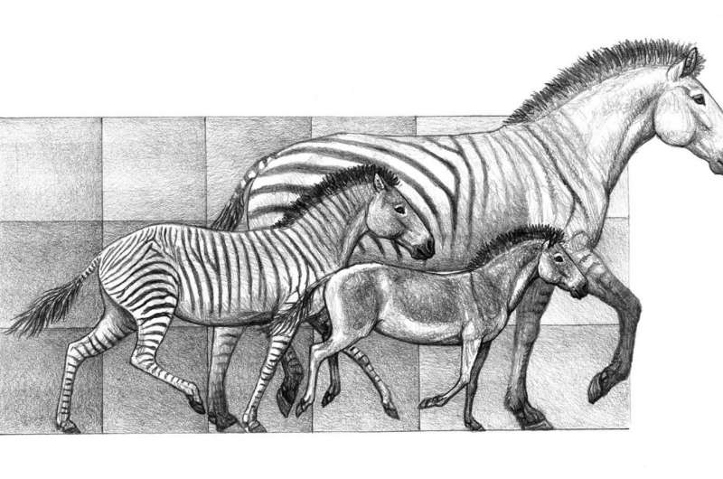 Climate change responsible for rapid expansion of horse species over last 20 million years