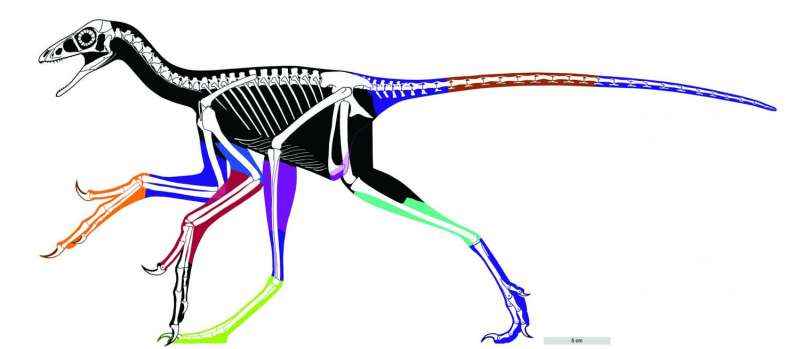 Lasers flesh out dino-bird profile