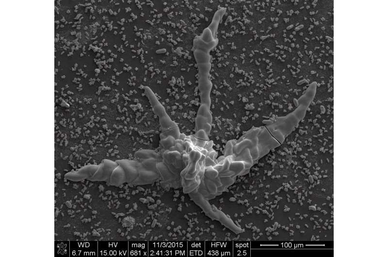 Fossil or inorganic structure? Scientists dig into early life forms
