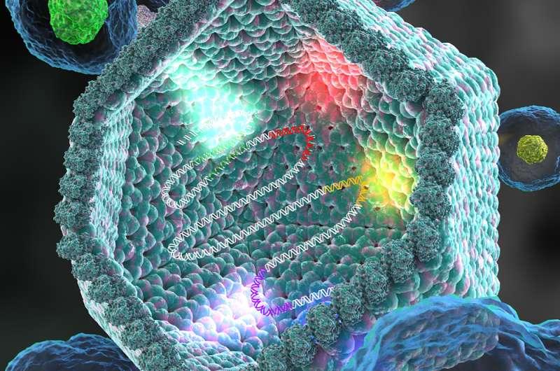 Discovered: Novel group of giant viruses