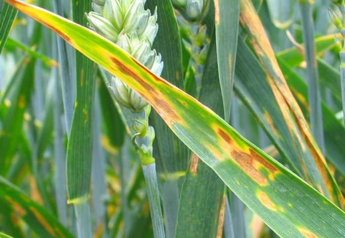 Drones that detect early plant disease could save crops