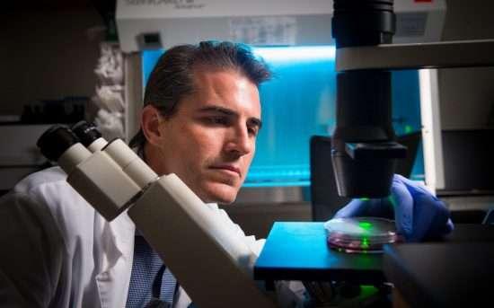 Team maps genome organization to link retinal development and retinoblastoma