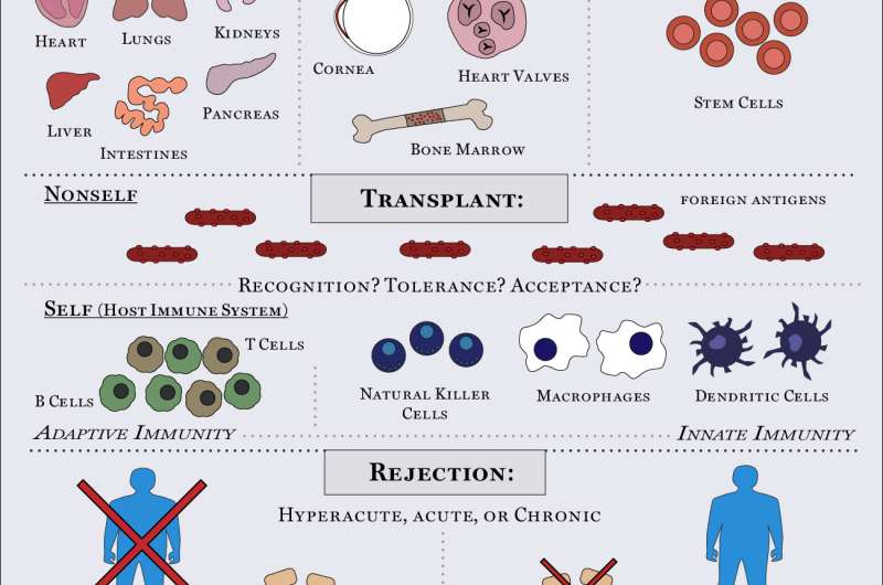 Experts uncover first molecular events of organ rejection