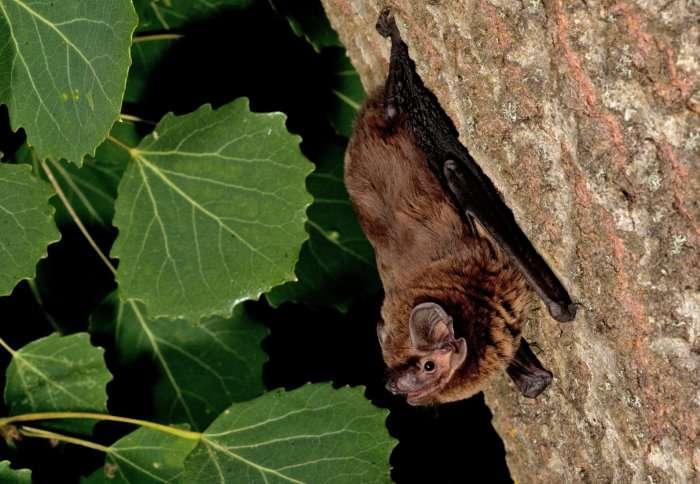 Smart detectors set to monitor urban bat life