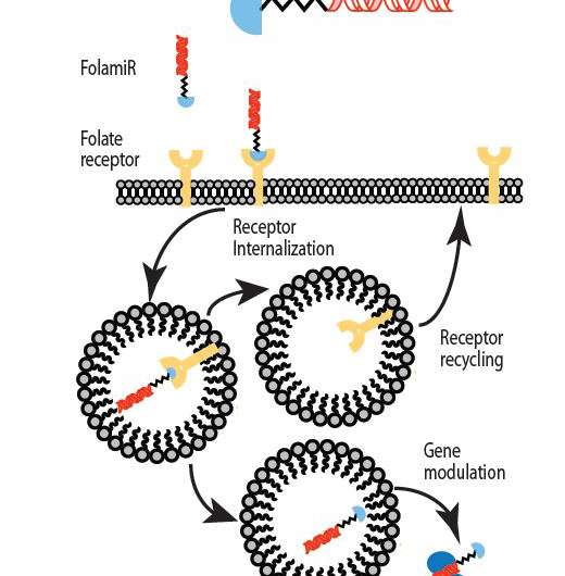 New cancer therapy eliminates toxic delivery vehicles for microRNA