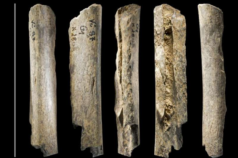 New dating of Neanderthal remains from Vindija Cave finds them older than thought