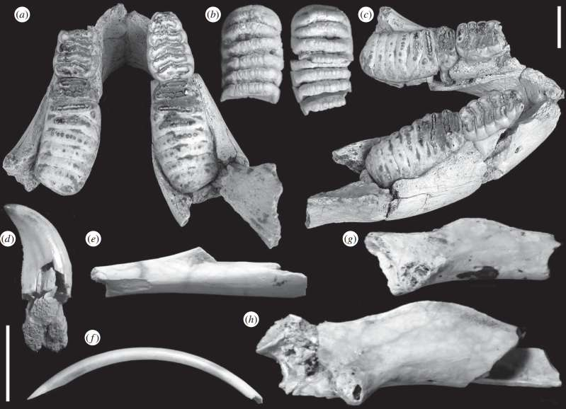Study of fossil remains on Sumba island reveals unique creature history