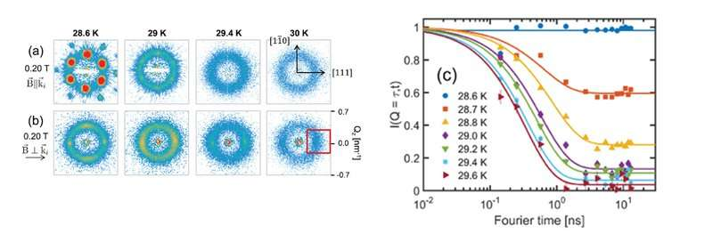 The influence of a magnetic field on chiral magnetic correlations