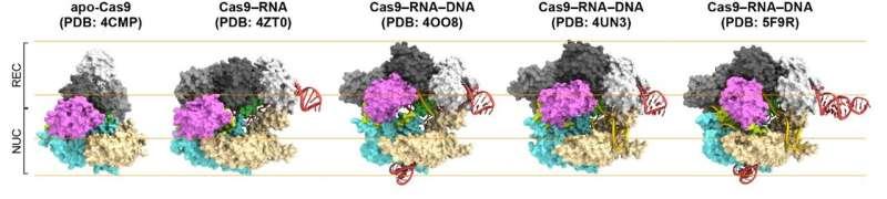 Genetic engineering mechanism visualized