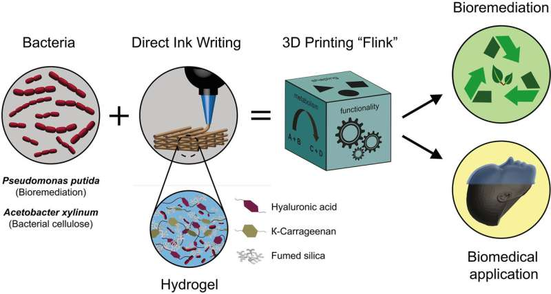 3-D-printed minifactories: Researchers print 'living materials' with bacteria-loaded inks