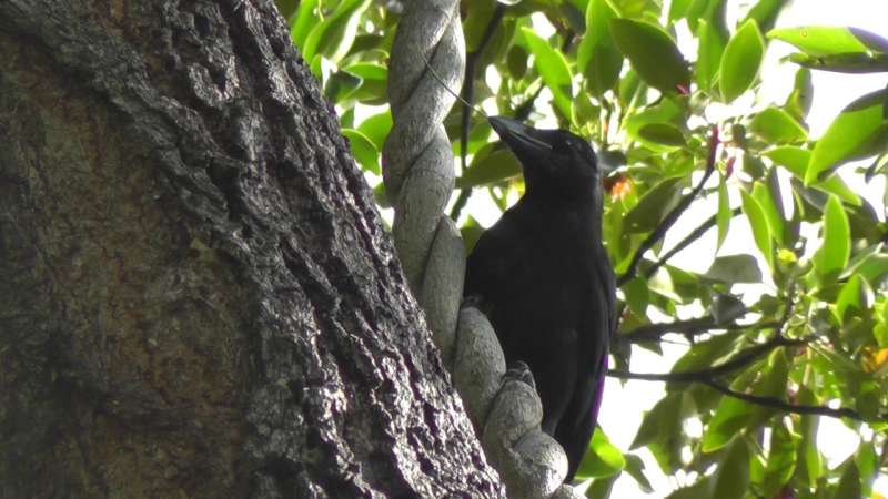 Crafty crows know what it takes to make a good tool
