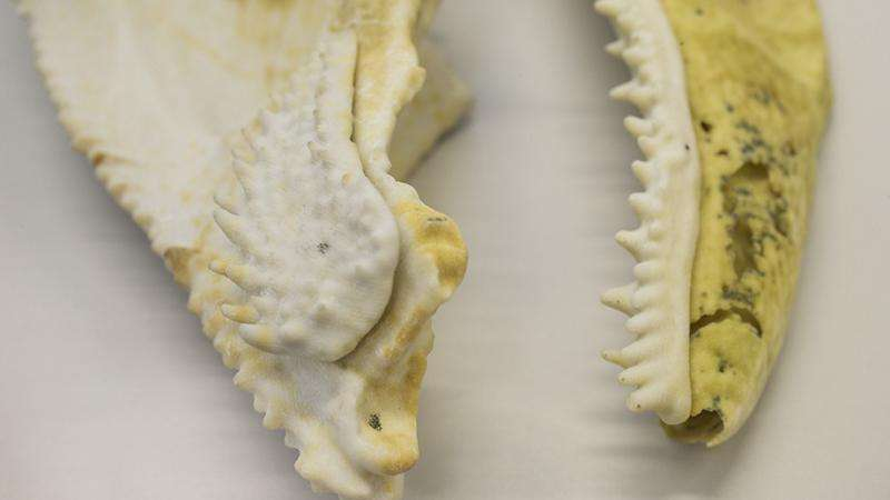 400-million-year-old fish fossil reveals jaw structure linked to humans