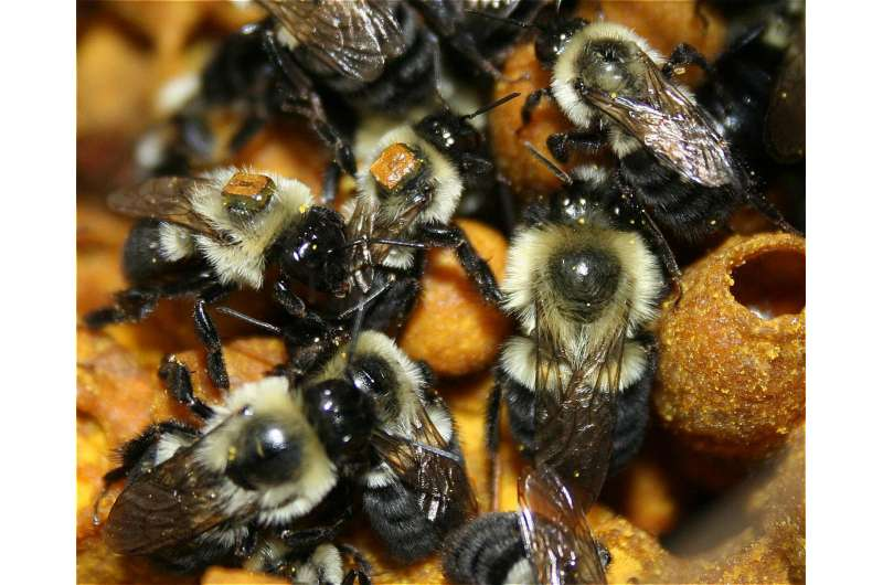 Researchers use big-brother tech to spy on bumblebees