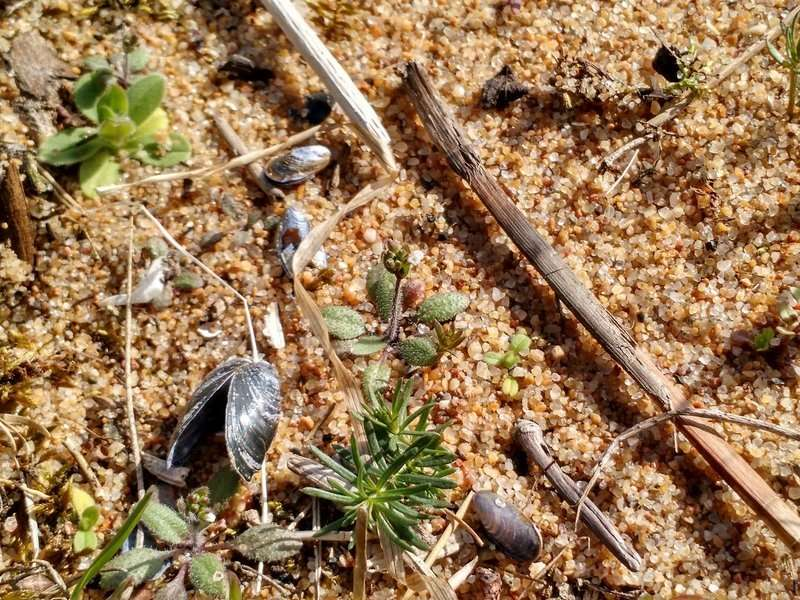 Genetic variability supports plant survival during droughts