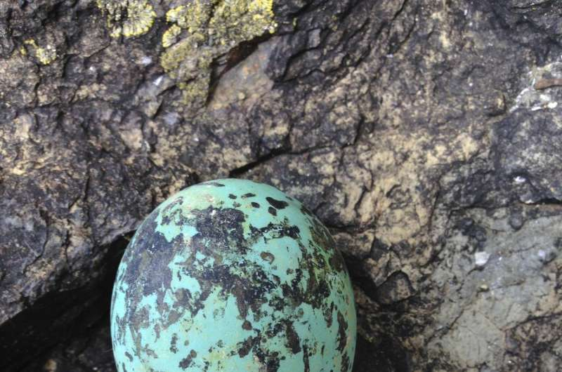 Researchers ponder the shape of birds' eggs