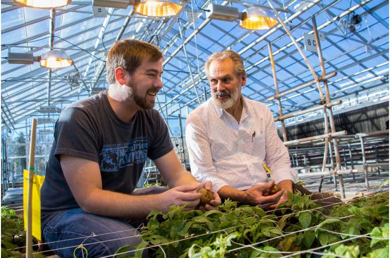 Virginia Tech researchers trace the potato's origins, learn about its untapped potential
