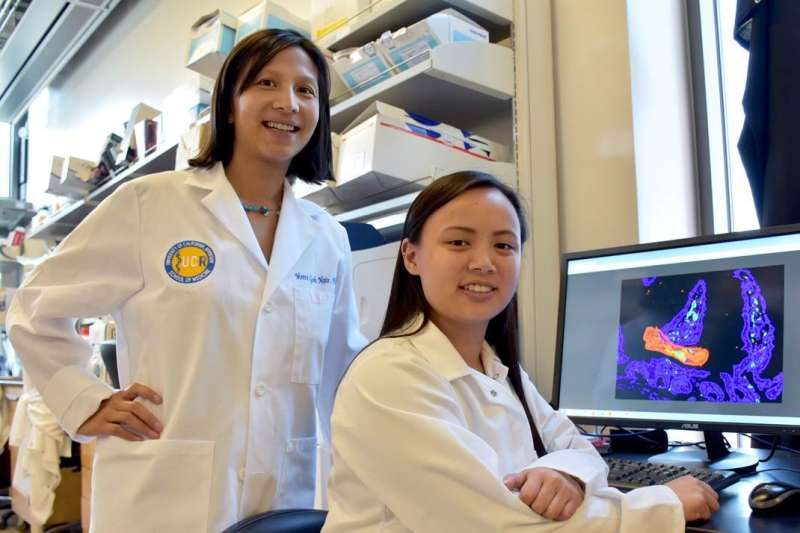 Researchers identify hormone for treating sepsis