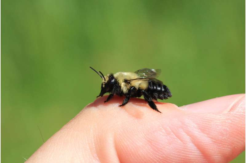 New discovery, more bees mark Michigan's first, full bee census