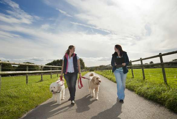 Research finds dog walkers motivated by happiness, not health