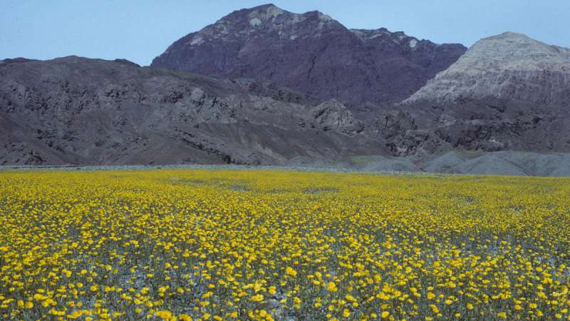 California's dry regions are hotspots of plant diversity