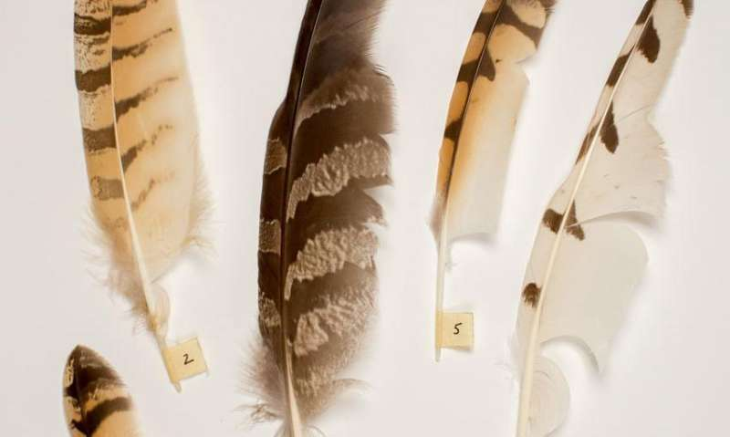 A beautiful wing design solution inspired by owl feathers