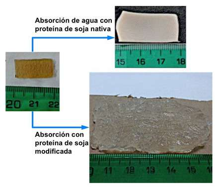 A bioplastic derived from soya protein which can absorb up to forty times its own weight