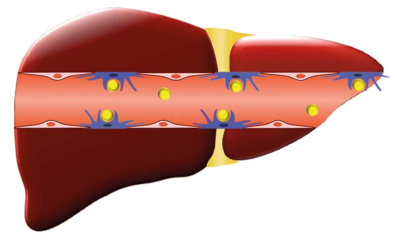 Age-old malaria treatment found to improve nanoparticle delivery to tumors