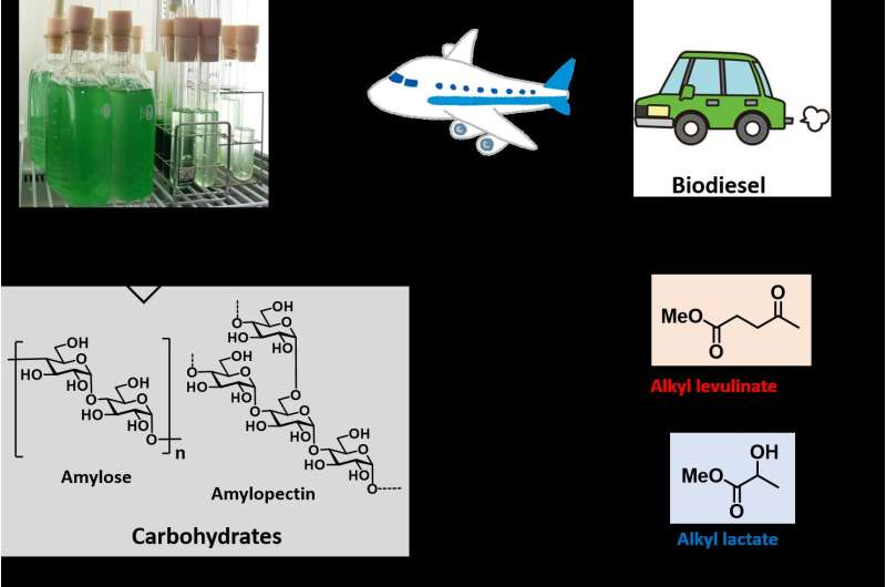 Algal residue -- an alternative carbon resource for pharmaceuticals and polyesters