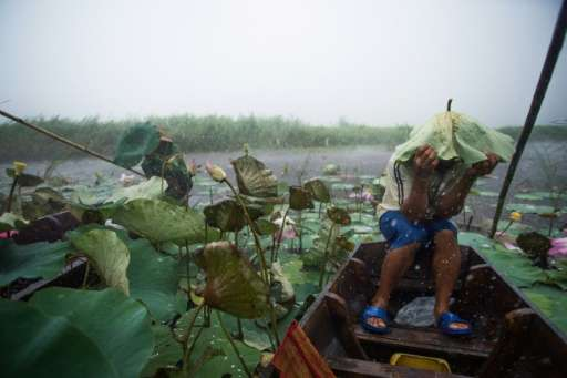 A local tourist guide uses a lotus leaf to shield his head during a summer storm on a lake in the Khao Sam Roi Yot national park