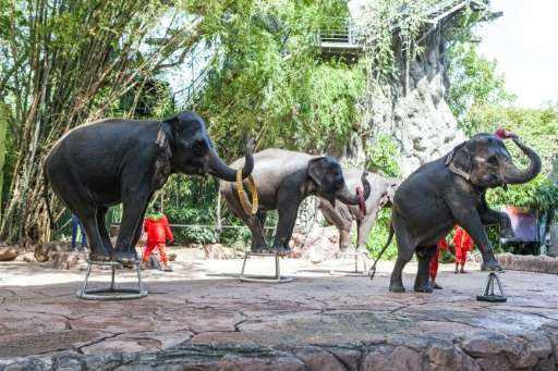 A multi-million dollar tourist elephant industry has flourished across Asia in recent decades, where thousands of the giant beas