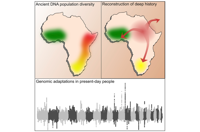 Ancient DNA data fills in thousands of years of human prehistory in Africa