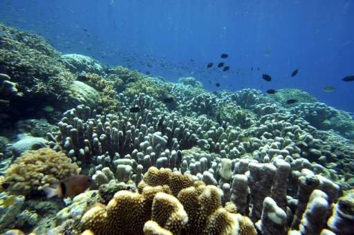An in-depth probe along a 50,000-kilometre (31,000-mile) stretch of the Pacific found that up to 90 percent of some coral coloni