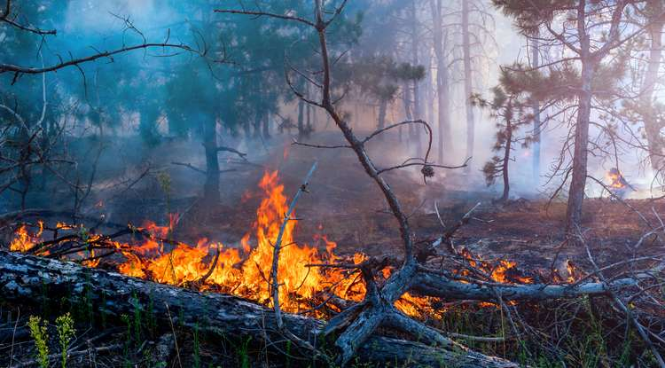 An insider's perspective on the science behind wildfires