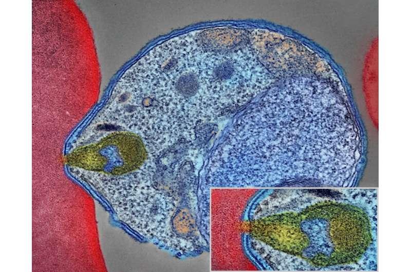 Anti-malaria drugs: Potential new target identified