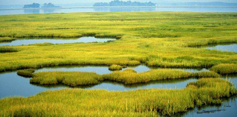 As communities rebuild after hurricanes, study shows wetlands can significantly reduce property damage