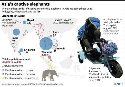 Asia's captive elephants