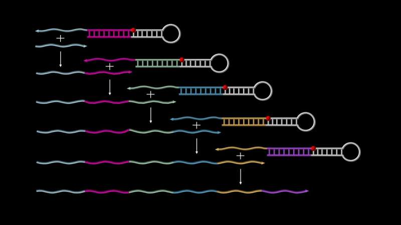 Autonomously growing synthetic DNA strands
