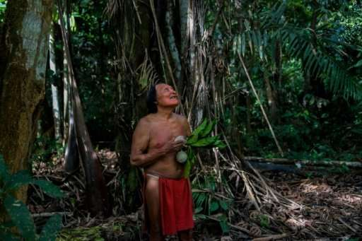 A Waiapi man looks on as a boy picks fruits from a Geninapo tree