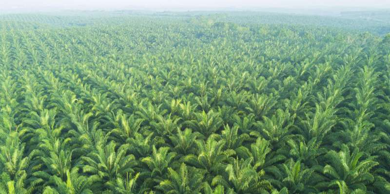 Banning oil palm blocks good practices