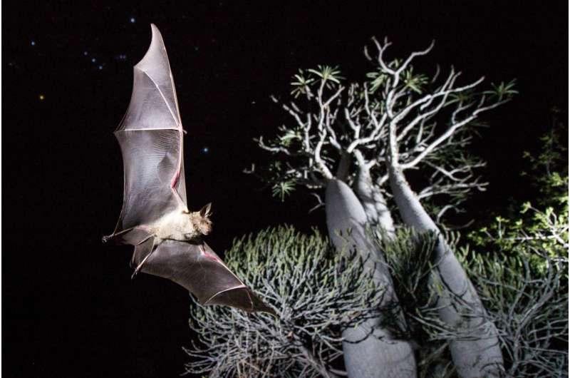Bat biodiversity is in danger on islands worldwide
