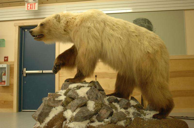 Bears breed across species borders