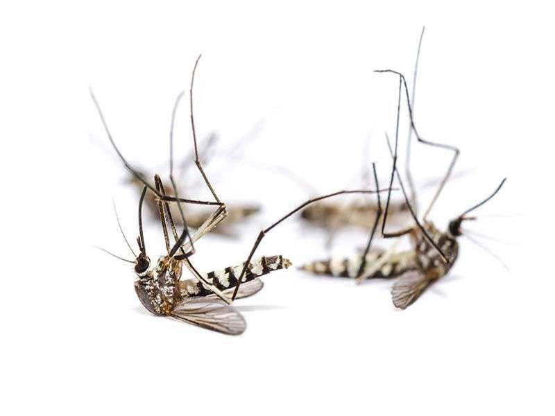 Beat back mosquitos after hurricane irma